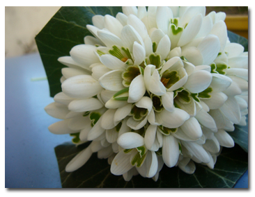bouquet perce-neige